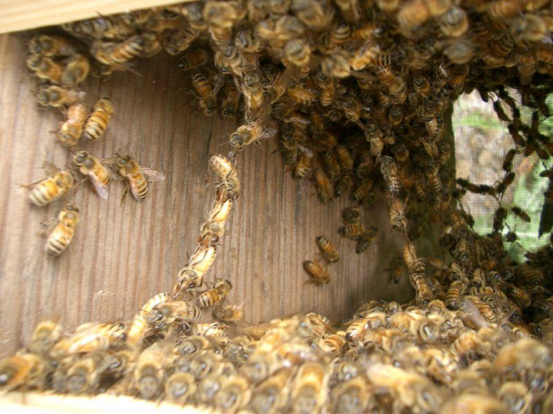 Inside hive-precomb