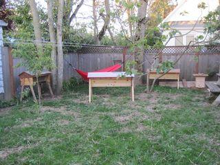 Beeyard and hammock